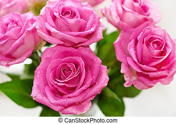 buquet, rosas cor-de-rosa
