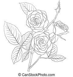 buquet, rosas, desenho, ilustração, mão