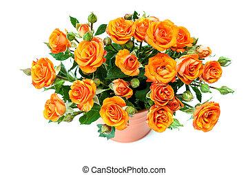 buquet, rosas, white., vermelho