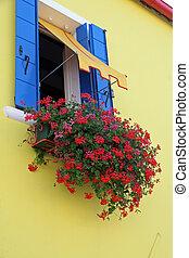 burano, 家, 黄色, ゼラニウム, 島, 花, 赤