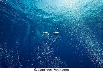 burbujas, océano