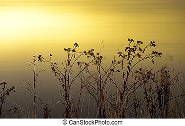 Burdock grass on blurred background.
