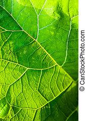 Burdock green leaf close up