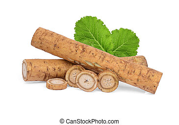 burdock roots or kobo with green leaves isolated on white background