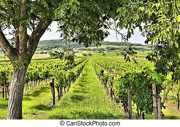 Burgenland wine land