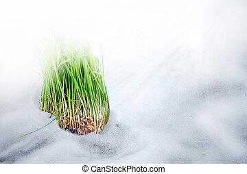 burgeon - Grass on the snow