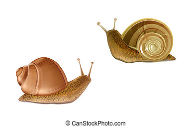 3d realistic two creeping Burgundy or Roman snails. French cuisine delicatessen, edible and farming European specie snail, skincare cosmetics ingredient. Gastropods isolated on white background