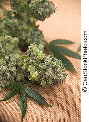burlap, buquet, folhas, marijuana, cannabis, fundo, flores, sobre