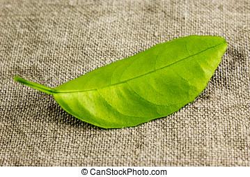 burlap, folhas, limão, verde