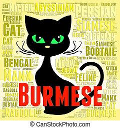Burmese Cat Indicating Felines Offspring And Pedigreed