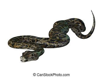Burmese Python on White - Burmese python or Python...