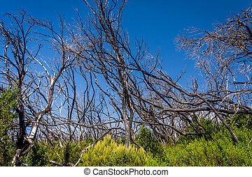 Burn down forest, La Gomera
