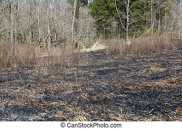 Burn Out Grass - The burn out grassy field of the forest.