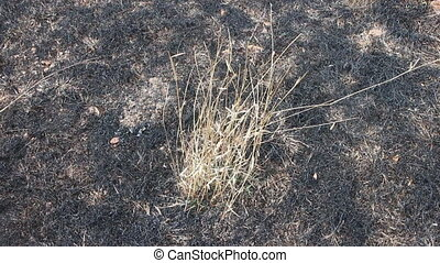 burn with fire ground in wild. dry plants  on a black ground