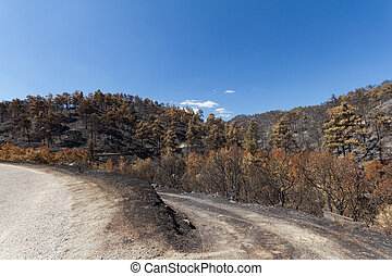 Burned forest following a forest fire in Troodos, Cyprus