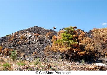 burned hilltop