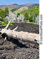 burned tree in lava flow on green slope of Etna