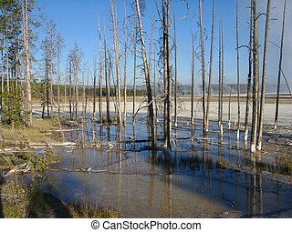 Burned trees - burned trees at Yellowstone National Park