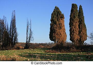Burned trees in israel