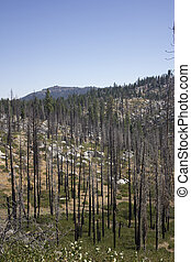 Burned trees in the forest