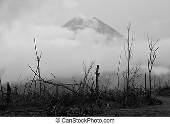 Burned Trees & Volcano Background - Black and White -...