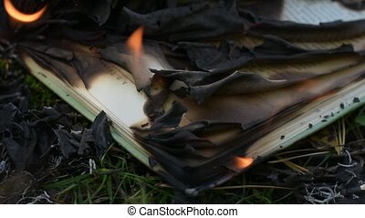 Burning book with opened pages. Static shot, closeup