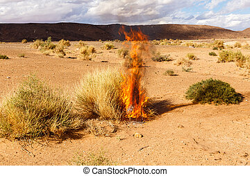 burning Bush grass in the desert