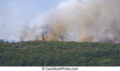 burning bushes in the hills, Montenegro