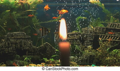 Burning candle on the background of the aquarium with small...