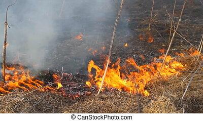 burning dry grass 1