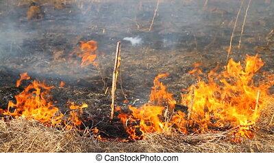 burning dry grass 2