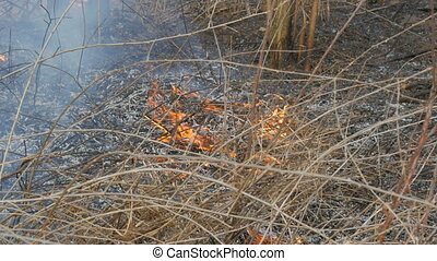 Burning dry grass and branches close up view. Dangerous wild...