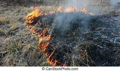 burning dry grass in early spring