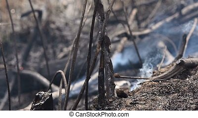 Burning dry grass in the forest