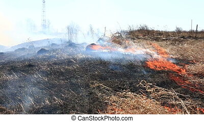 burning dry grass reason of forest fires