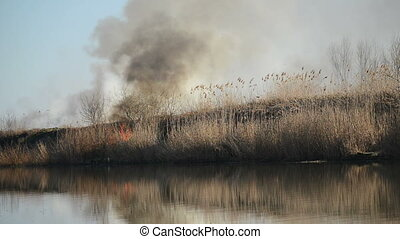 Burning Dry Reeds by the River