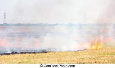 Burning field crops. Forest fire, burning dry grass.