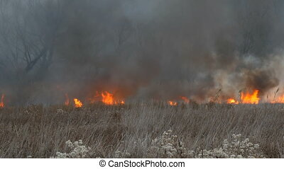 Burning fire in nature, natural disaster. A huge high flame of a storm fire that burns dry grass and bushes in the forest steppe.