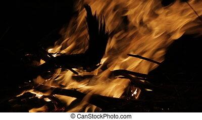 Burning firewood silhouette, Qld Island, Australia - Extreme...