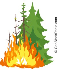 Burning Forest - Burning forest spruces in fire flames,...