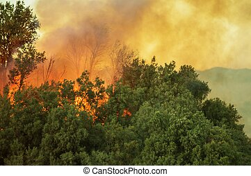 Burning Forest Wildfire - Burning Forest. California ...