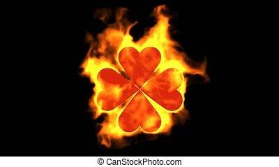 burning four hearts shaped quadrifoglio leaves,valentine's...