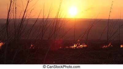 burning grass against the sunset background