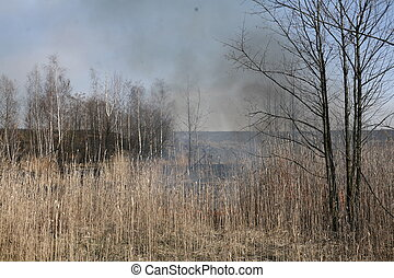 Burning grass in the field