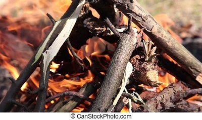 Burning in the forest bonfire from dry twigs.