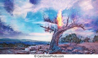 Burning old tree in arid rocky land. Canyon at the horizon