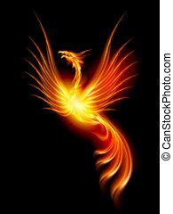 Beautiful Burning Phoenix. Illustration isolated over black background