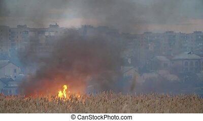 Burning reed and bulrush on the bank of the Dnipro in spring...