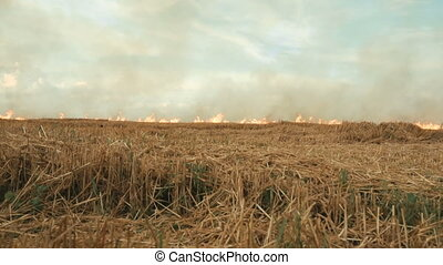 Burning smoky field, dolly evening shot
