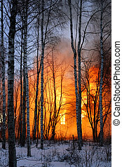Burning - A wooden house burning in a winter forest.